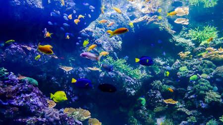 Photo pour Photo Picture an Acquarium Full of Beautiful Tropical Fishes - image libre de droit