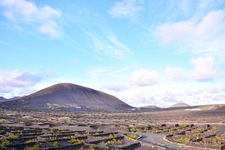 Photo pour Vineyards in La Geria Lanzarote canary islands Spain - image libre de droit