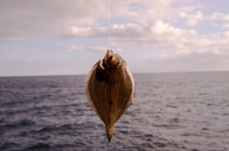 Foto de Whole Single Fresh Sole Fish Near The Ocean - Imagen libre de derechos