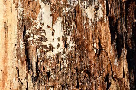 Photo pour bark of a tree, photo as a background, digital image - image libre de droit