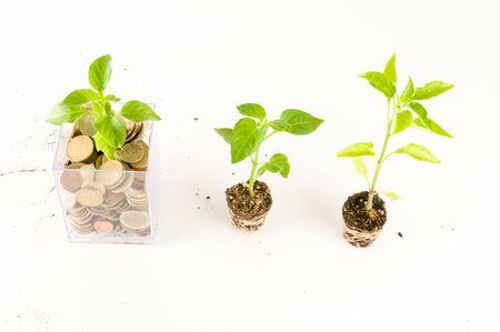 Photo pour Plant Growing In Savings Coins Investment And Interest Concept - image libre de droit
