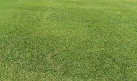 Field of fresh green grass texture. Background