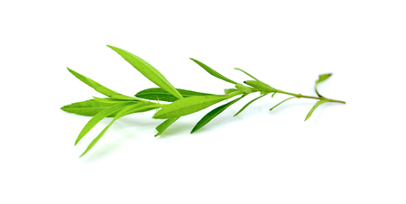 tarragon isolated on a white background