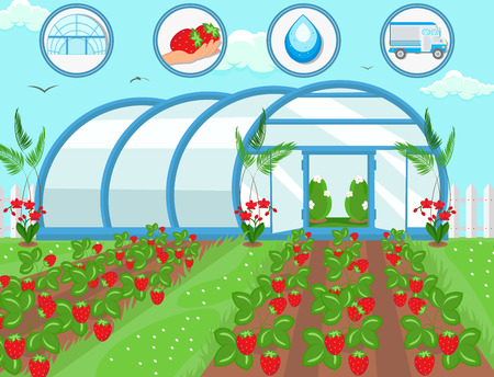 Illustration for Strawberries in Greenhouse. Harvesting Concept. Natural Resource. Growing Plants. Watering and Irrigation System. Crop Delivery. Fruit Picking Work. Farm Business Concept. Vector Flat Illustration. - Royalty Free Image
