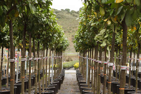 The seedlings in flowerpots