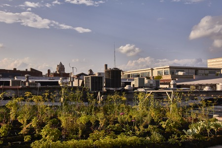 Urban Farming and Gardening in Detroit USA on a house roof