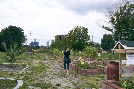 Urban Farming and Gardening Beet in Detroit USA with Skyline