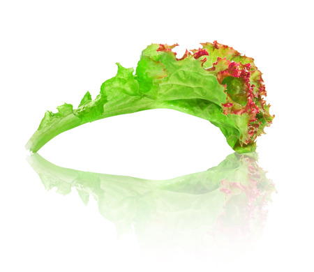 green with red edging lettuce with reflection on isolated white background