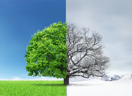 Foto de Concept of doubleness. Summer and winter of different sides with tree on the center. - Imagen libre de derechos