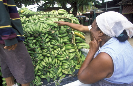Bananas at the Market  at the Village of Las Terrenas on Samanaon in The Dominican Republic in the Caribbean Sea in Latin America.