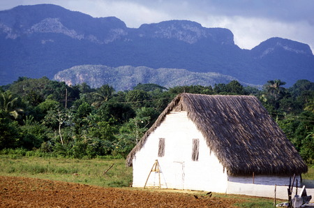 the landscape neat the villageo of Vinales on Cuba in the caribbean sea.