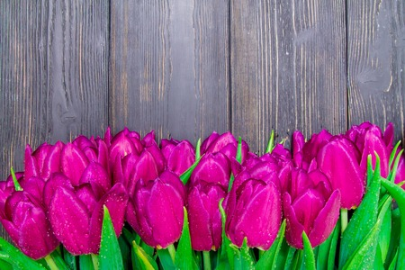 Photo pour Womens Day copy space with bright pink tulips on a black wooden background , textures - image libre de droit