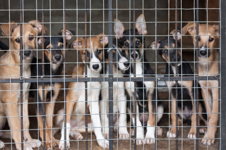 Photo for Many cute puppies locked in the cage - Royalty Free Image