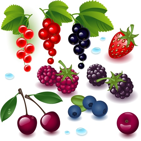 complete set berry on a white background