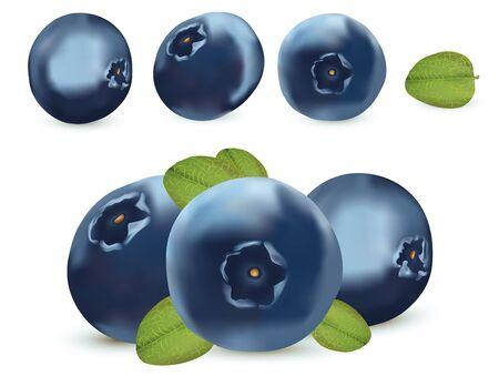 Illustration pour Forest berry. 3d realistic blueberry on white background. Icons blueberry close up. Vector illustration. - image libre de droit