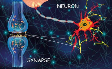 Illustration pour Anatomy neyron cells. Transmission signal of impulse in a living organism. Signaling in the brain. Neural connections in the brain form thoughts, concept learning. Structure neyron for educational, medical, biological use. Synapse electronic pulses. Vector illustration - image libre de droit
