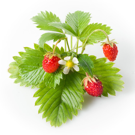 Wild strawberry isolated on white