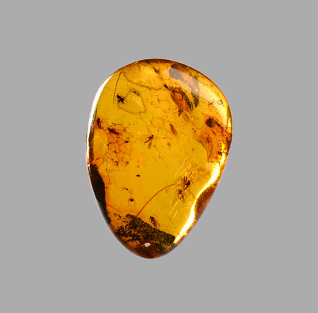 polished amber with mosquitoes