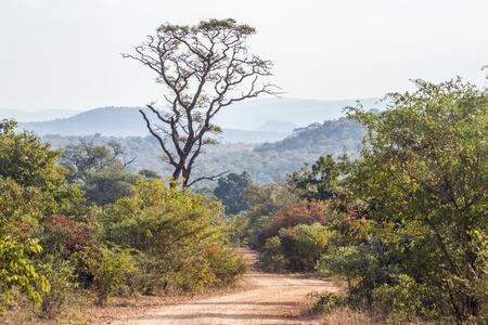 Punda Maria landscape in  South Africa