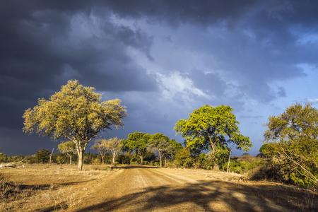 Stormy landscape in Kruger National Park, South Africa;