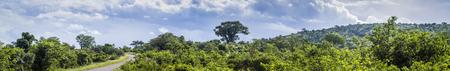 Punda Maria in South Kruger National Park, South Africa