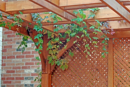 Pergola covered by hanging grapevines