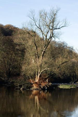 renatured river