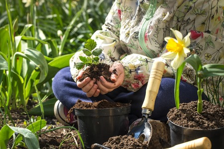 Photo pour Little girl planting flowers in the garden, Earth Day. Kid helping at the farm. - image libre de droit