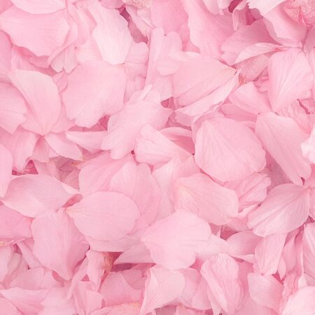 Photo for Blossom petals pink flower leaves - Royalty Free Image