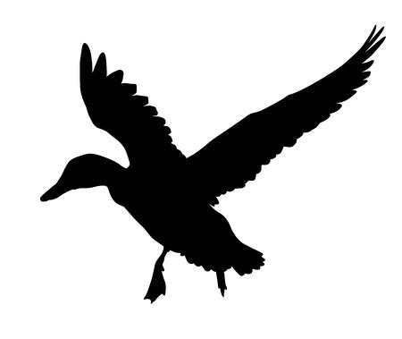 Ilustración de Flying duck silhouette.  Vector EPS 8 - Imagen libre de derechos