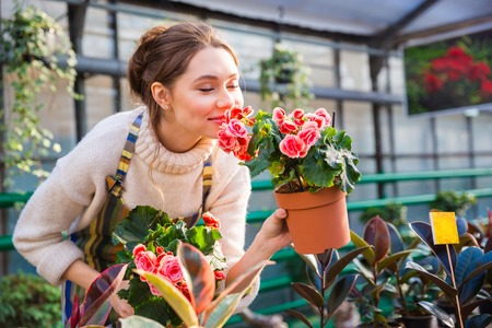 Photo for Attractive cute woman gardener smelling pink flowers in pot with eyes closed in greenhouse - Royalty Free Image