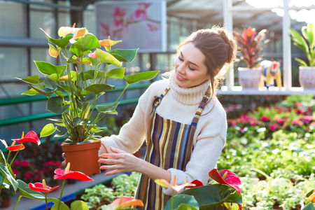 Lovely happy young woman gardener choosing flower pot with anthuriums in garden center