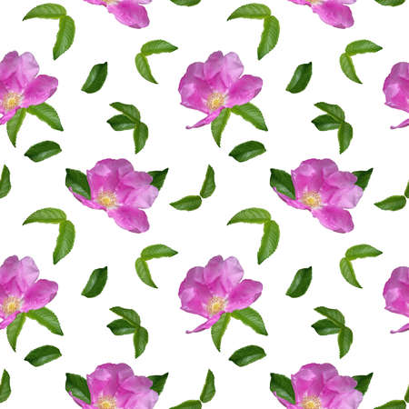 Photo for Pattern with Rosehip flower with raindrops and green leaves on a white background. Seamless floral pattern for fabric, textile, wrapping paper. bright pink flower - Royalty Free Image