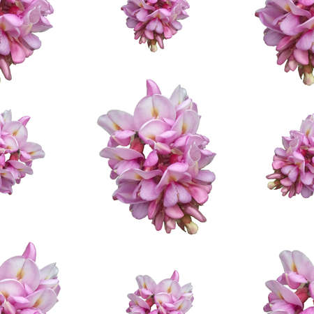 Photo pour acacia flowers on a white background. Seamless floral pattern for fabric, textile, wrapping paper. bright pink flower - image libre de droit
