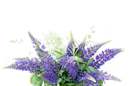 Photo pour Blue lupines bouquet isolated on white background. Meadow natural wildflowers bouquet. - image libre de droit