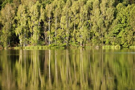Foto per fila di alberi che si riflettono sul lago - Immagine Royalty Free
