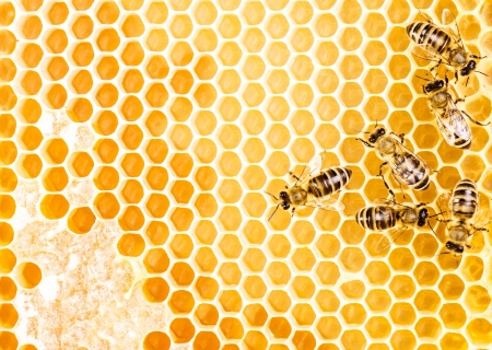 Working bees on honeycomb