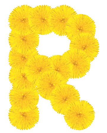 Letter R made from dandelion flowers isolated on white background