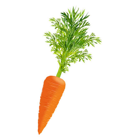 Illustration for Carrot for banners, flyers. Fresh organic and healthy, diet and vegetarian vegetables. Vector illustration isolated on white background. - Royalty Free Image