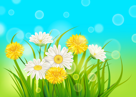 Illustration for Spring daisies and dandelions background fresh green grass - Royalty Free Image