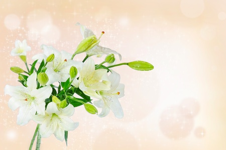 Beautiful white lily flowers
