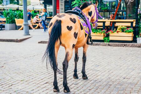 Photo pour brown horse with hearts shaved on her torso. horse on the street for riding tourists - image libre de droit