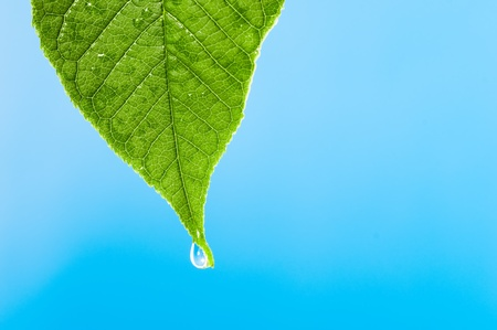 Green leaf with water droplet over water