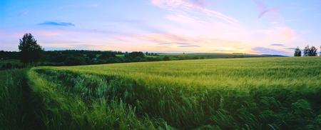 Photo pour Panoramic summer landscape at sunset. Focus on a foreground. - image libre de droit