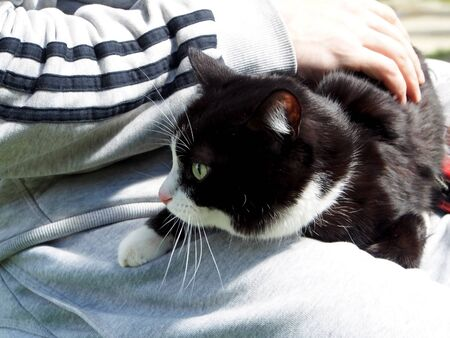 cat lies on the owner's lap and basks in the sun in the early morning