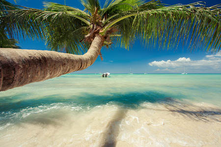 Beautiful palm tree over caribbean sea