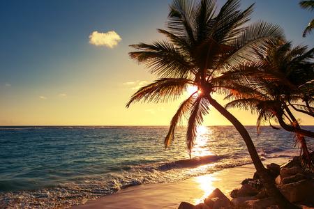 Photo pour Palm tree on the tropical beach, sunrise shot - image libre de droit