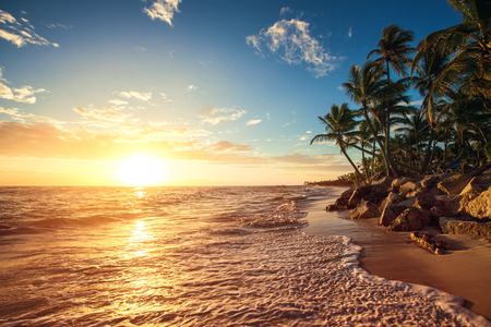 Photo for Palm trees on the tropical beach, sunrise shot - Royalty Free Image