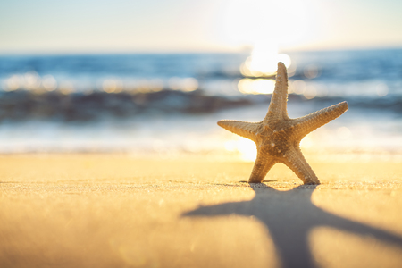 Photo pour Starfish on the beach at sunrise - image libre de droit