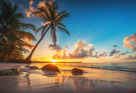 Foto per Tropical beach in Punta Cana, Dominican Republic - Immagine Royalty Free